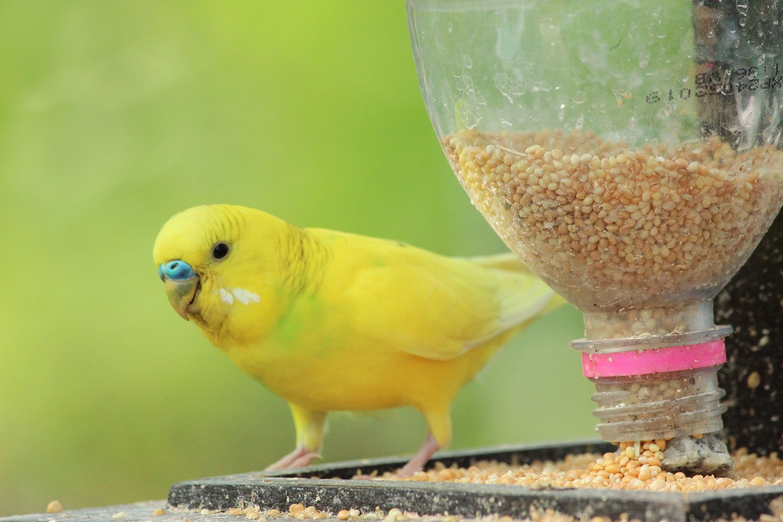 Close-Up Of Bird Perching Bird Feeder