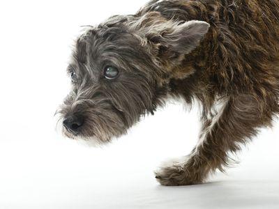 How to Treat Degenerative Myelopathy in Dogs