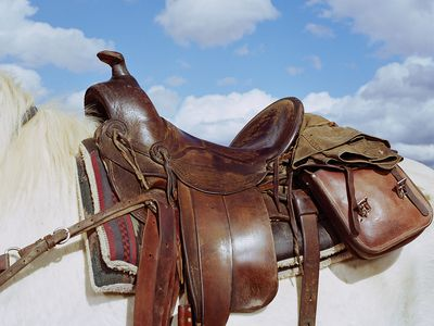 Basic Equipment You Need For Your First Horse