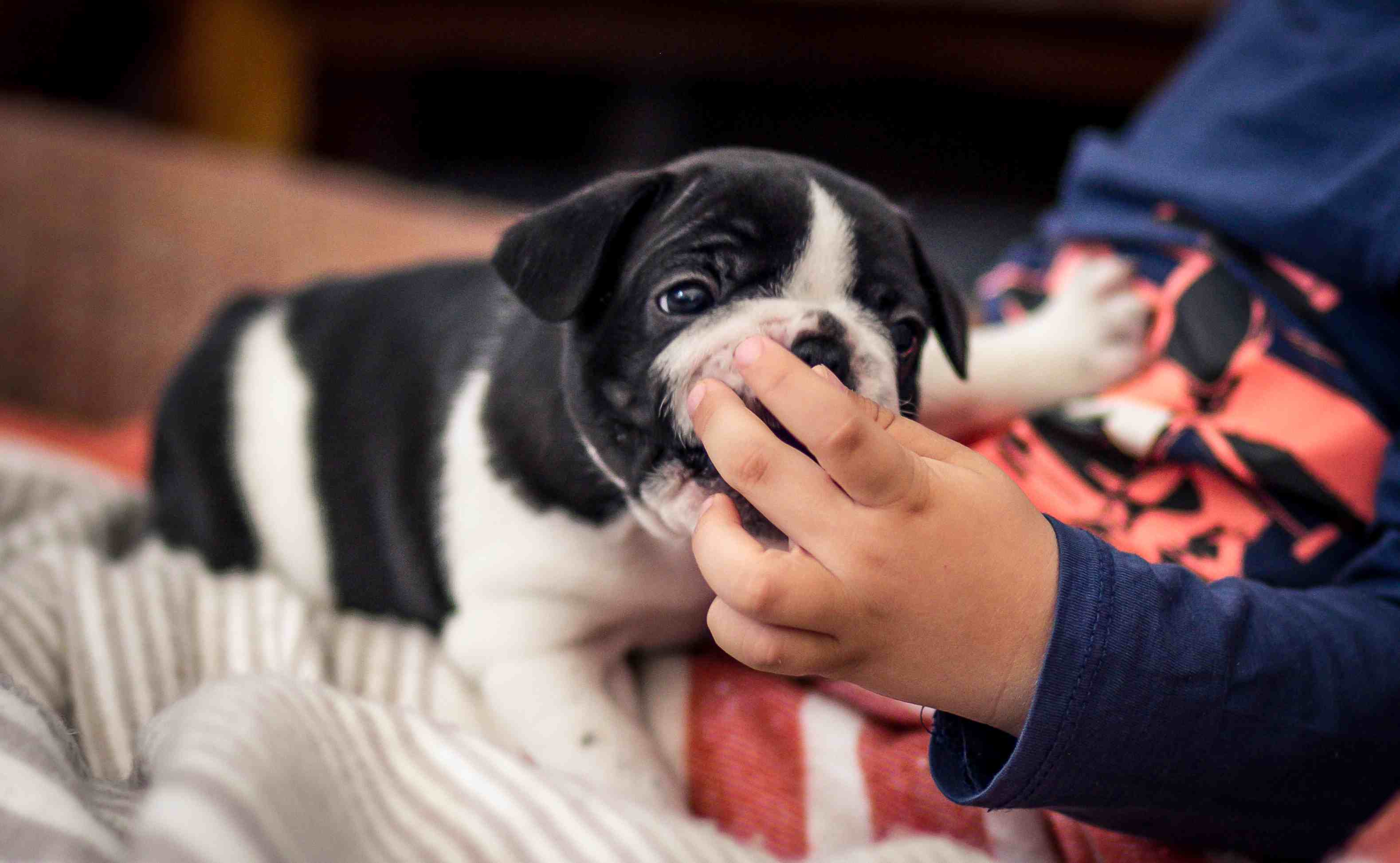 Puppy Chewing Young Boy's Fingers