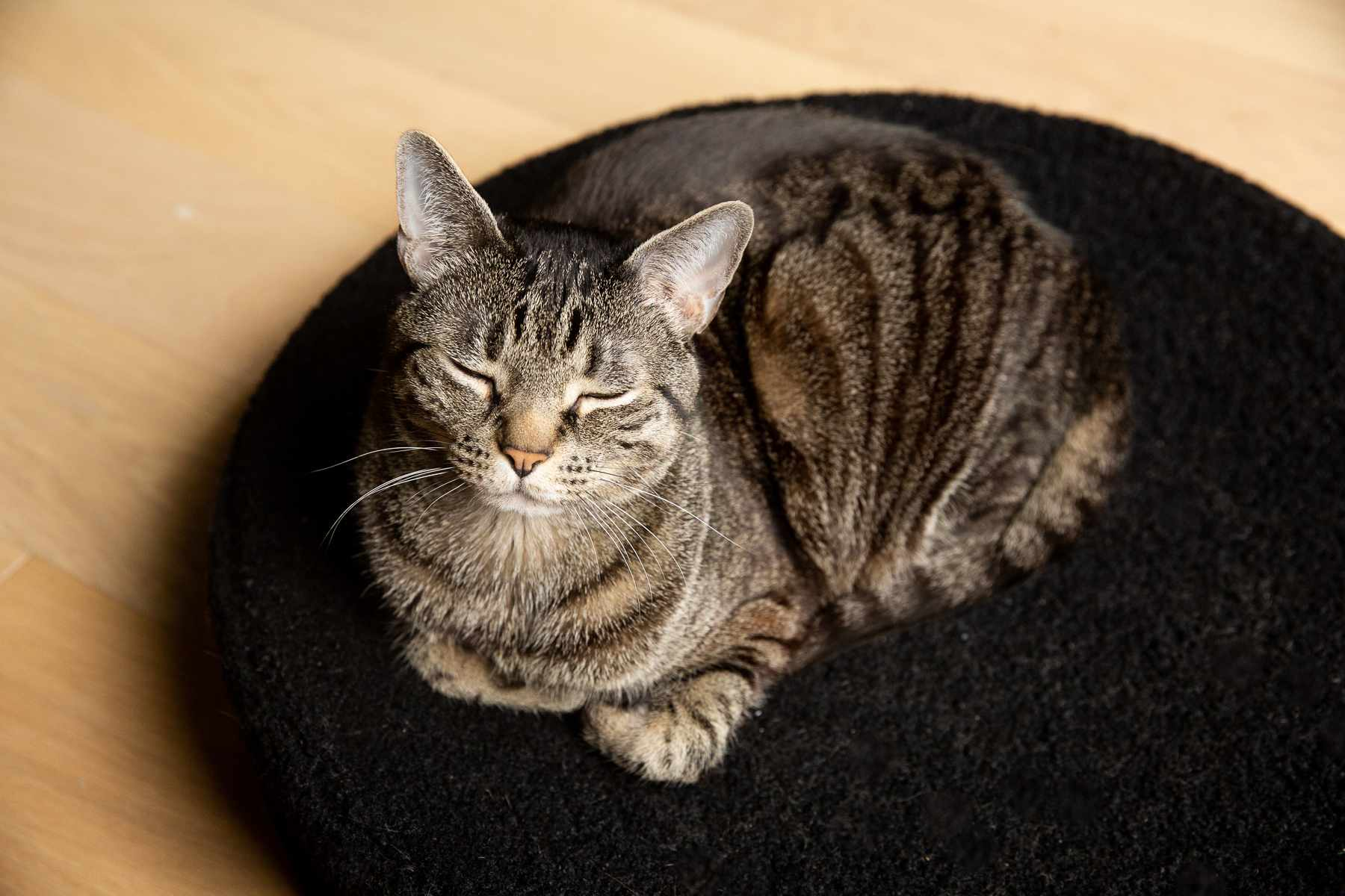 Brown striped cat with eyes closed on black rug