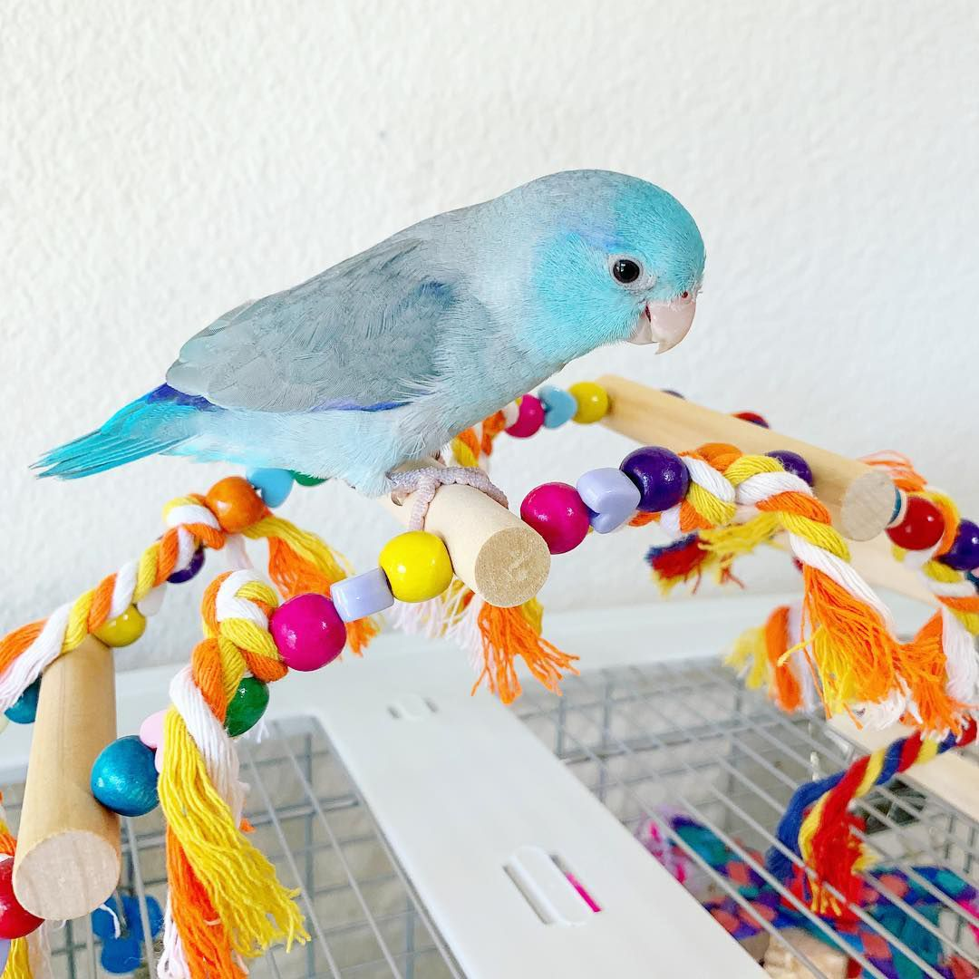 A bird playing with its toy on top of a cage.