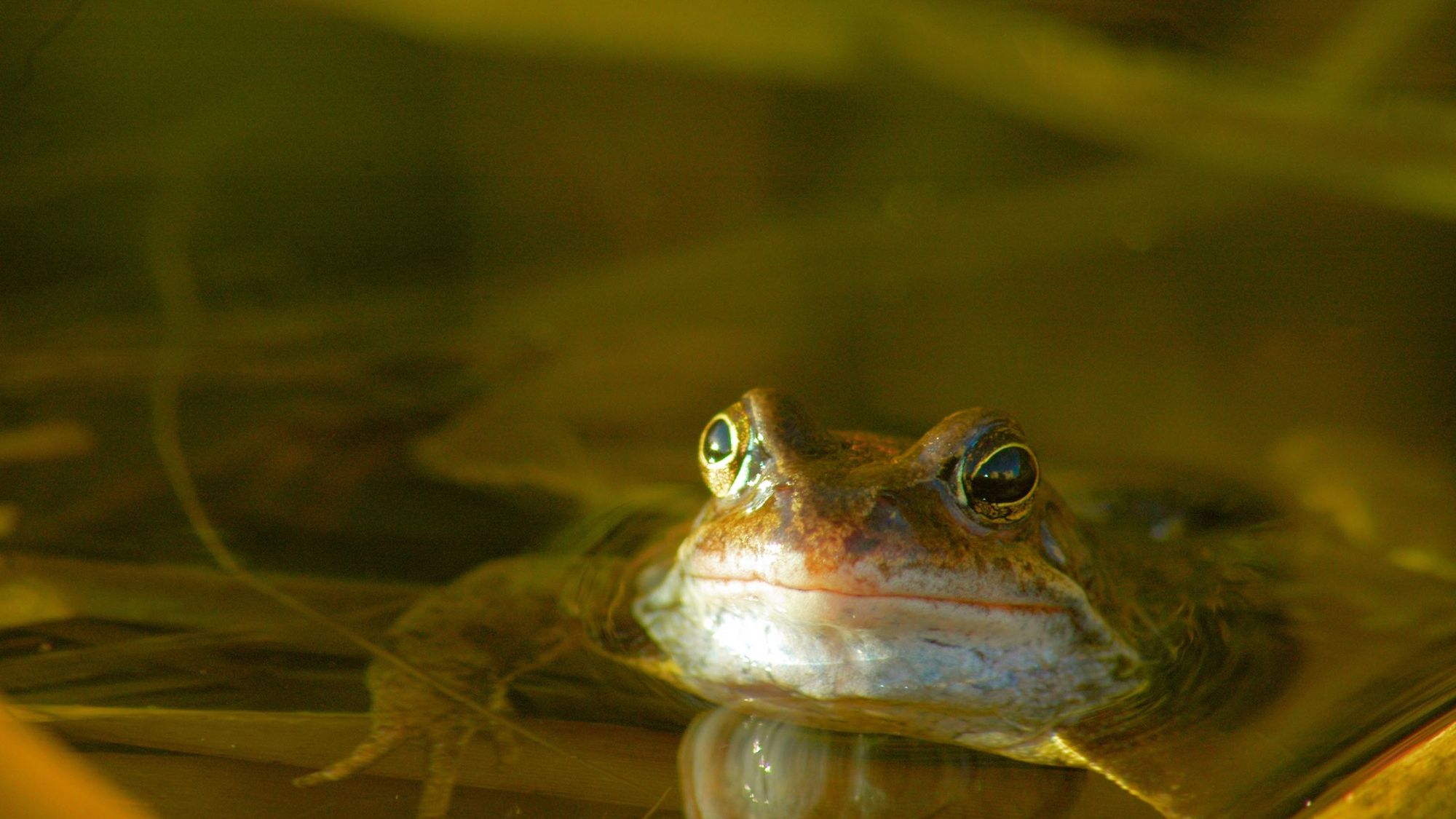 Building A Frog Friendly Pond