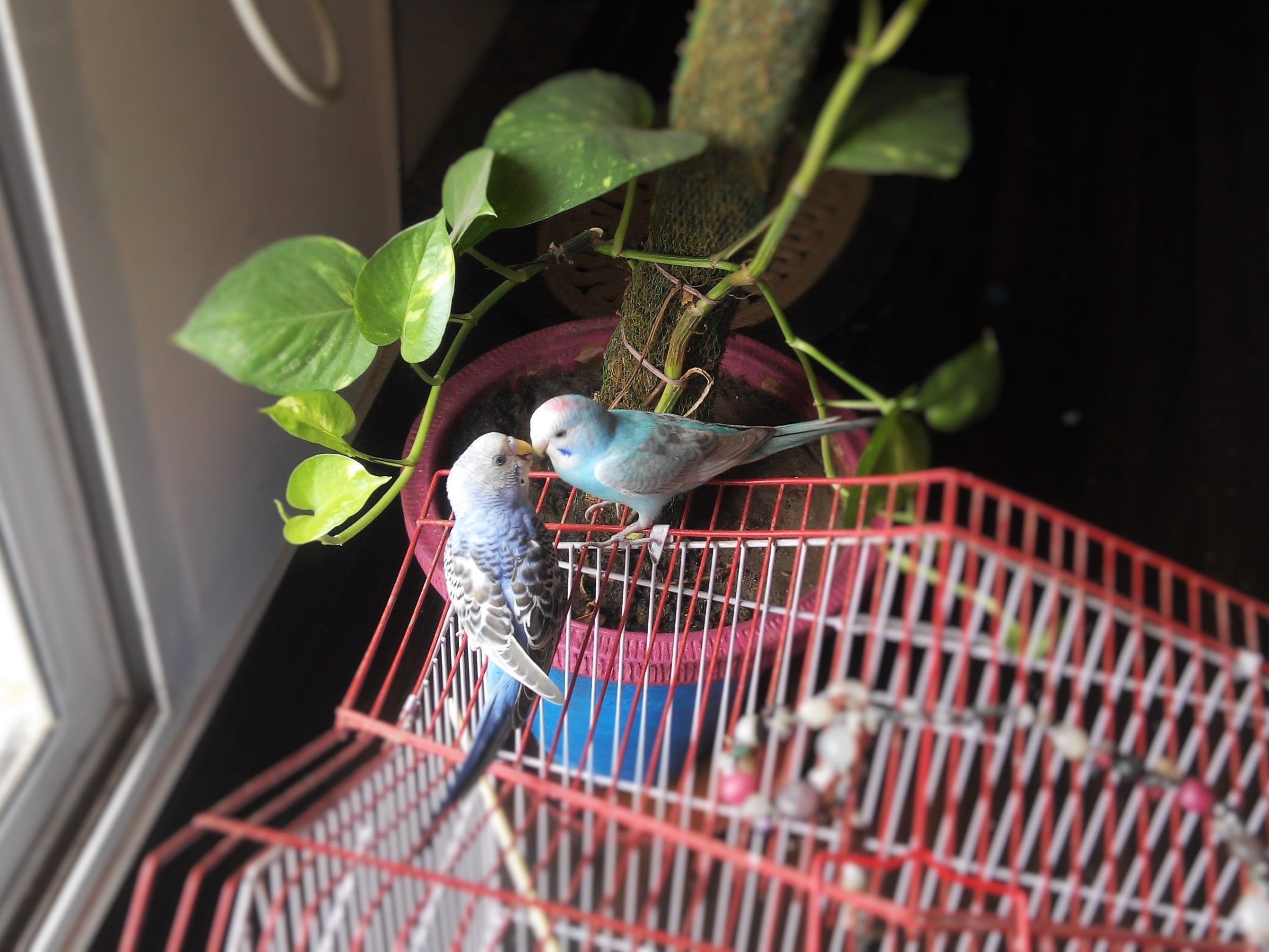 eac34c16d Why You Should Keep Your Bird Inside
