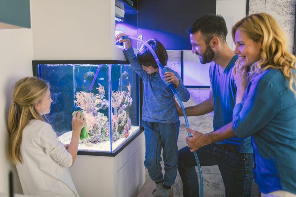 Tanque de arrecifes de limpieza familiar