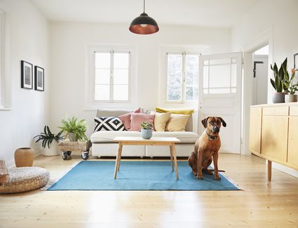 dog sitting in living room