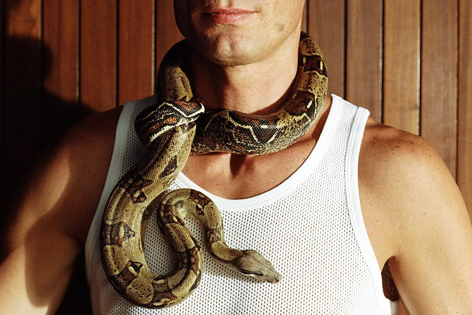 A boa constrictor wrapped around a man's neck.