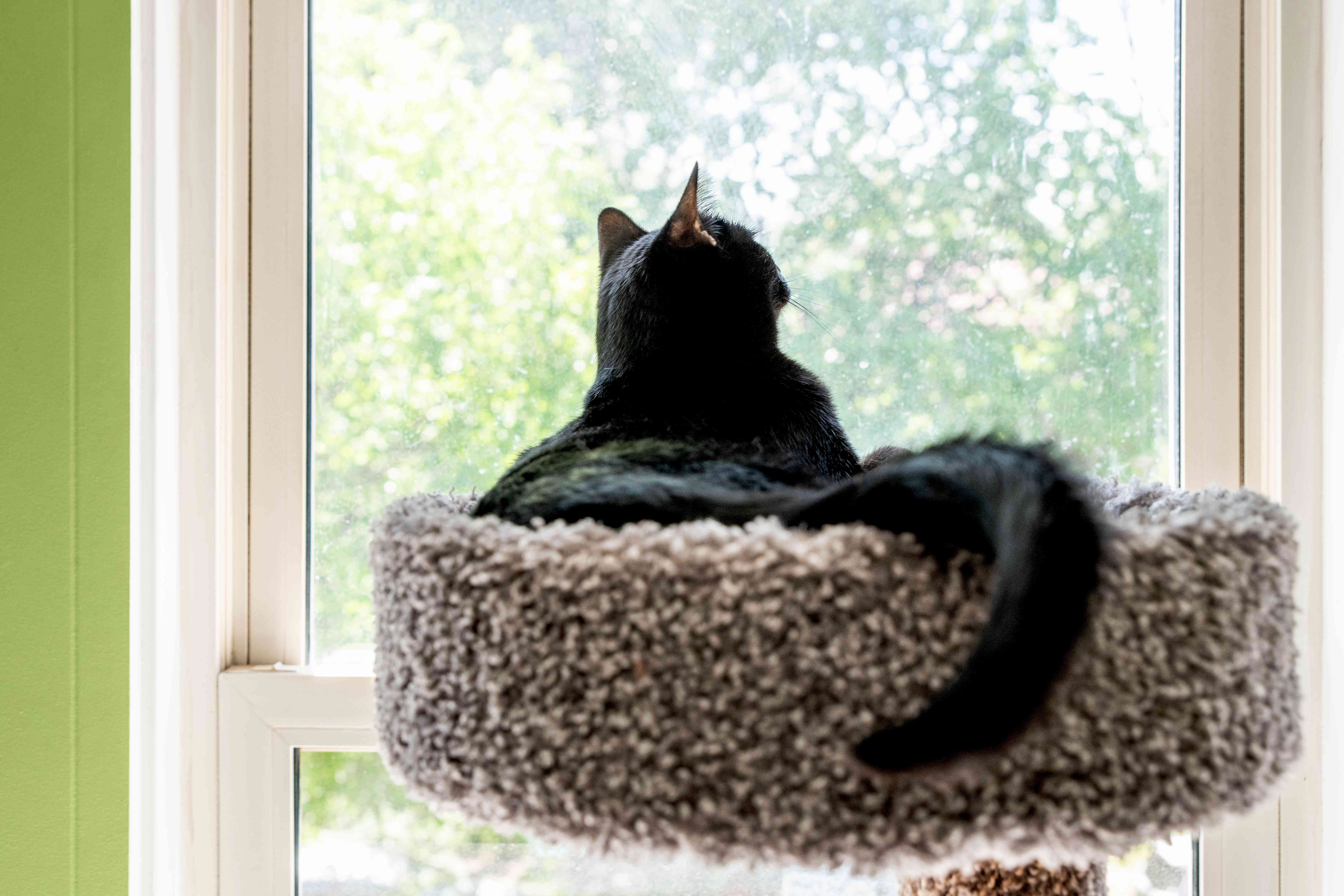 Black cat sitting in cat bed next to bright window