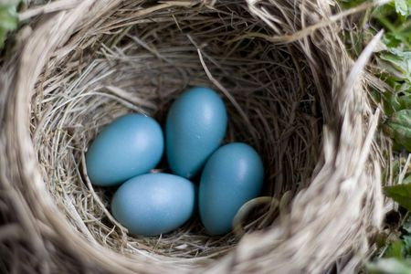 Are Eggs Nutritious for My Pet Bird?