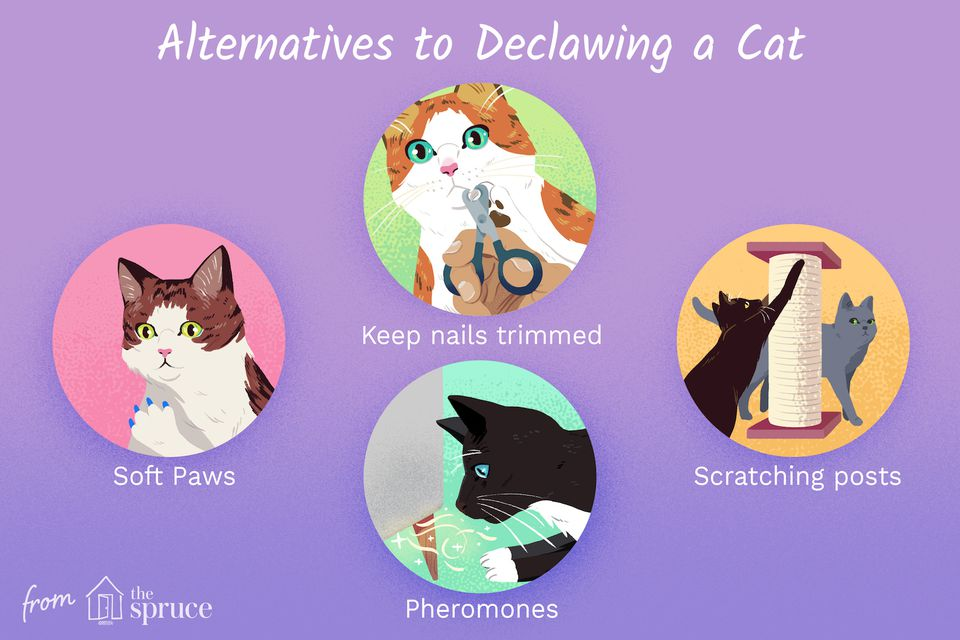 alternatives to declawing a cat illustration
