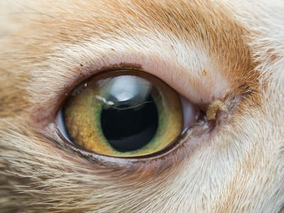 The Top Things You Need to Know About Anesthesia for Cats