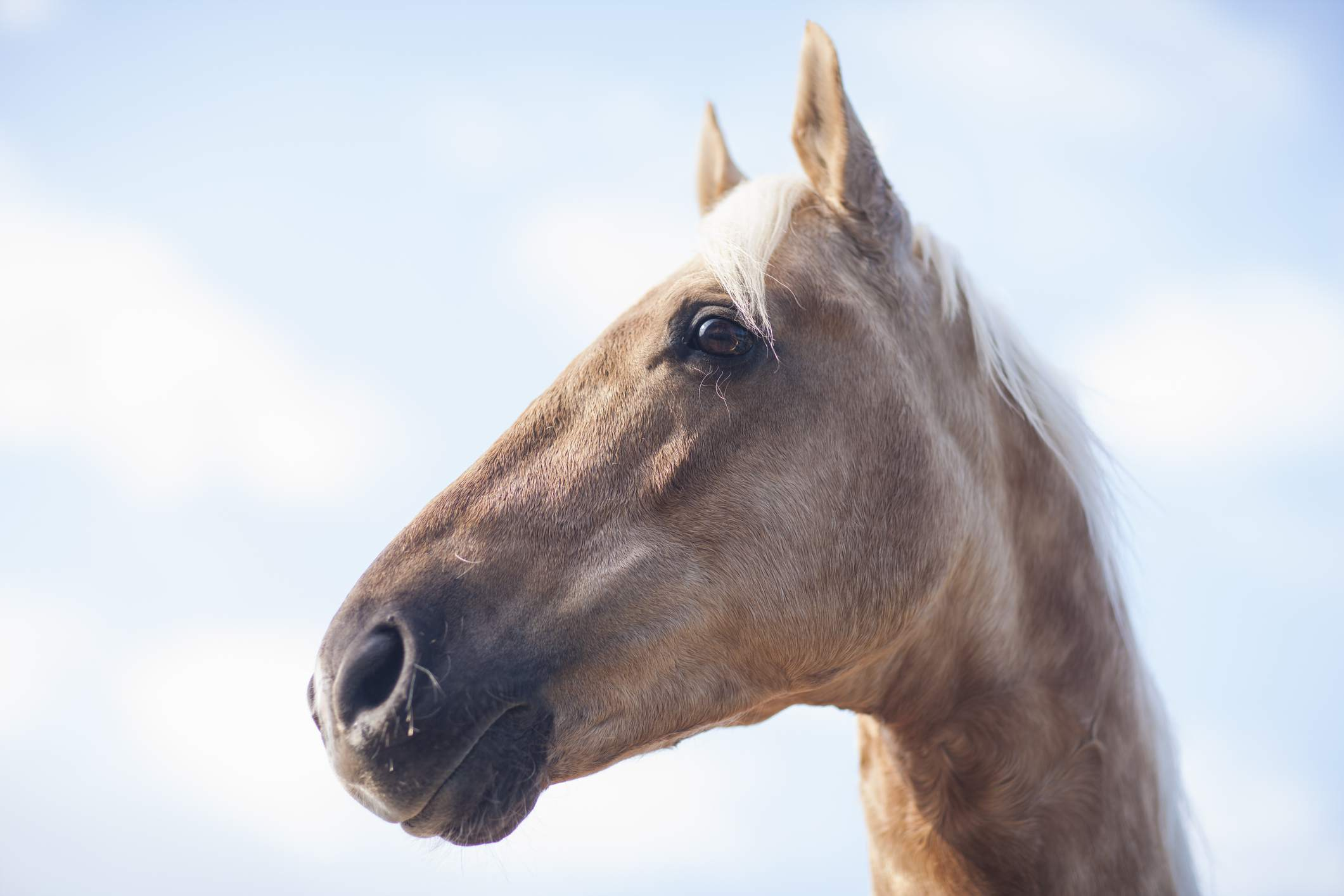 Horse looking left with the sky in the background.