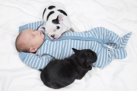 introducing puppies and babies properly