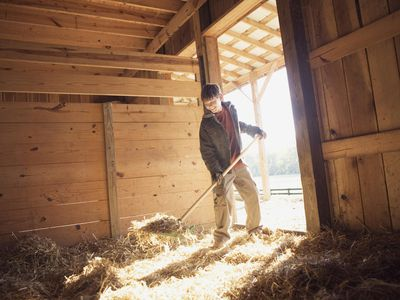 How to Clean (Muck Out) a Horse Stable