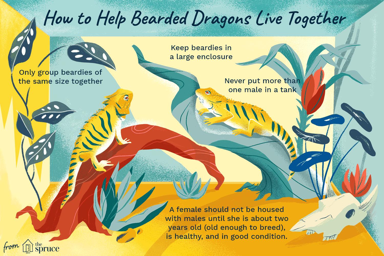 Ilustración de dos dragones barbudos