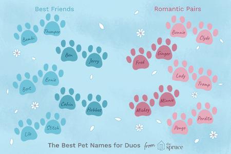 21++ Good twin pet names ideas in 2021