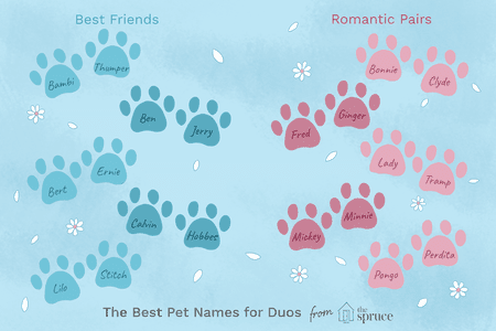 Clever Names For Pairs of Pets