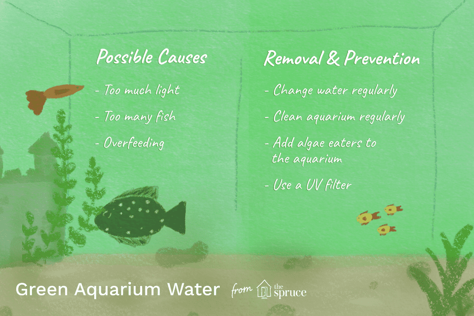 green aquarium water illustration
