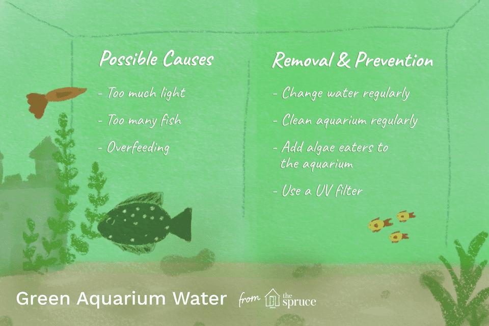 Ilustración de agua de acuario verde