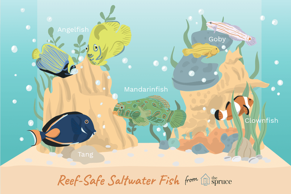 illustration of reef-safe saltwater fish