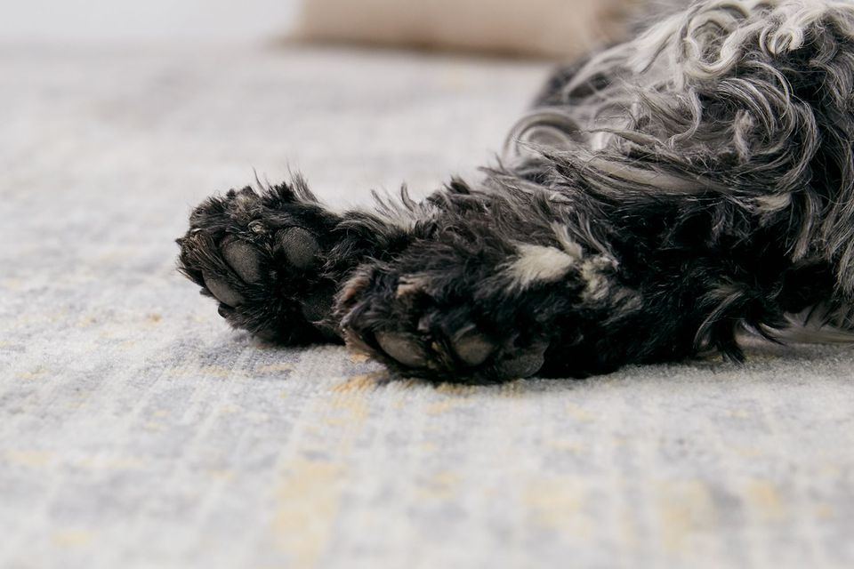 closeup of dog's paws. original asset, do not change