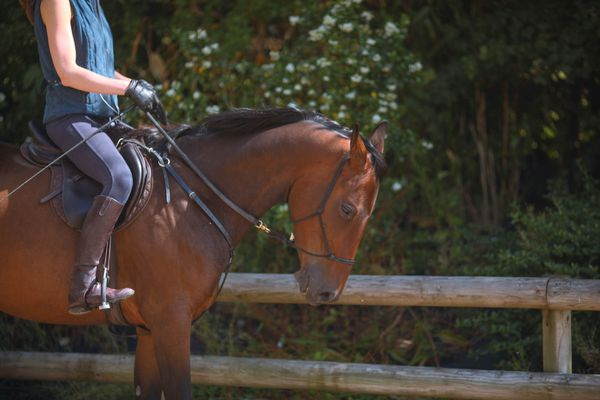 Woman riding horse with bitless bridle