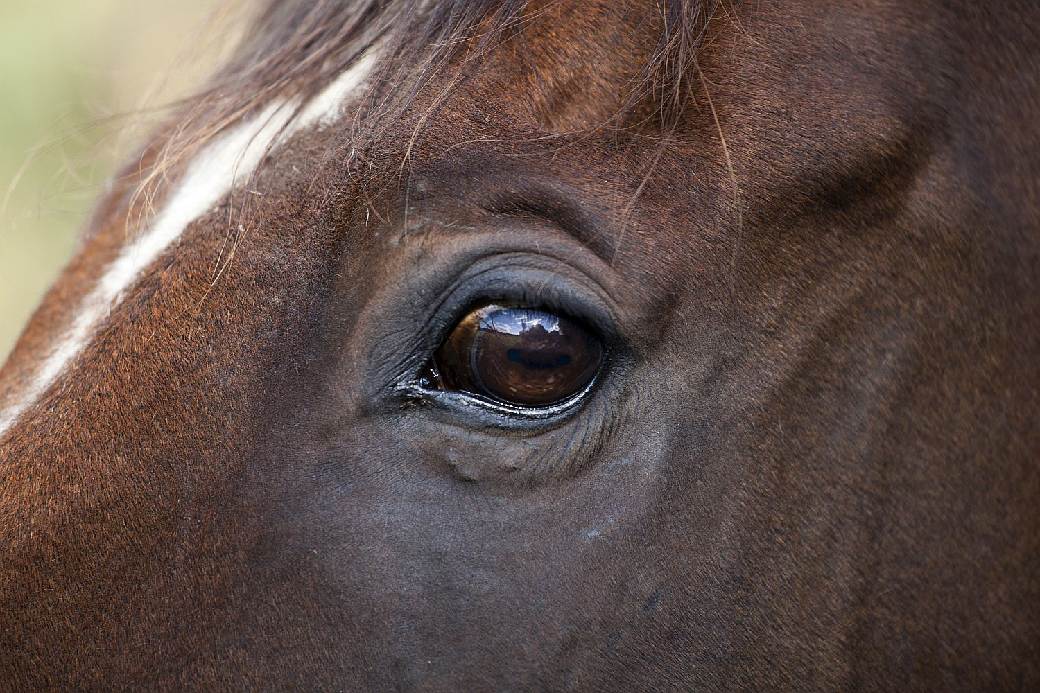 Horse\'s Eyes and Vision