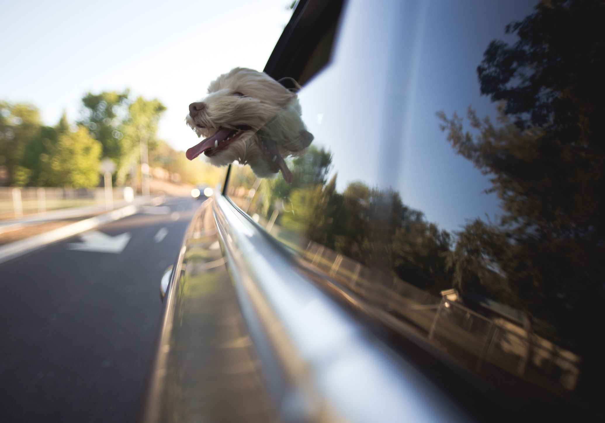 How To Cure Car Sickness In Your Dog