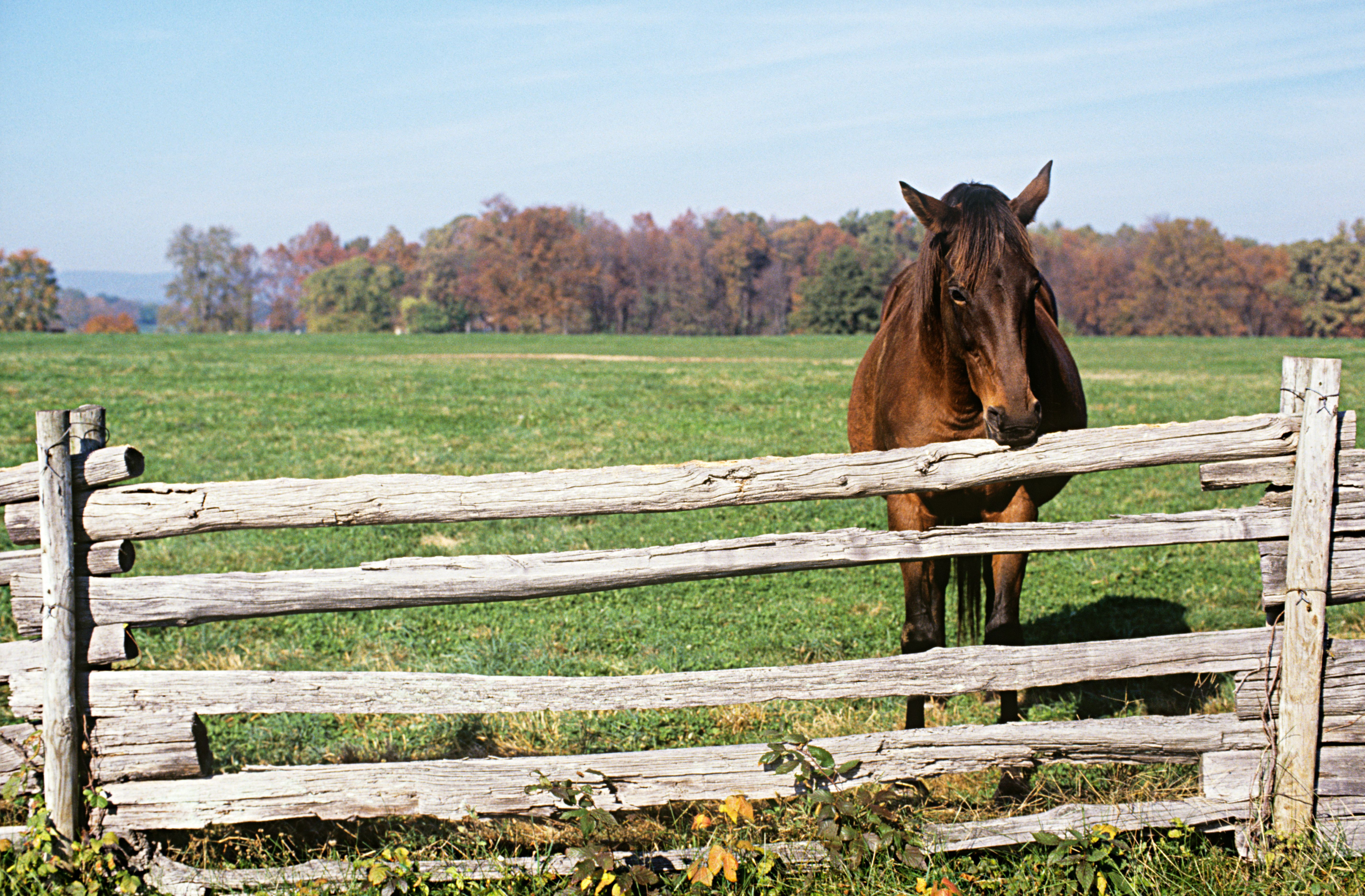 A horse standing near a fence