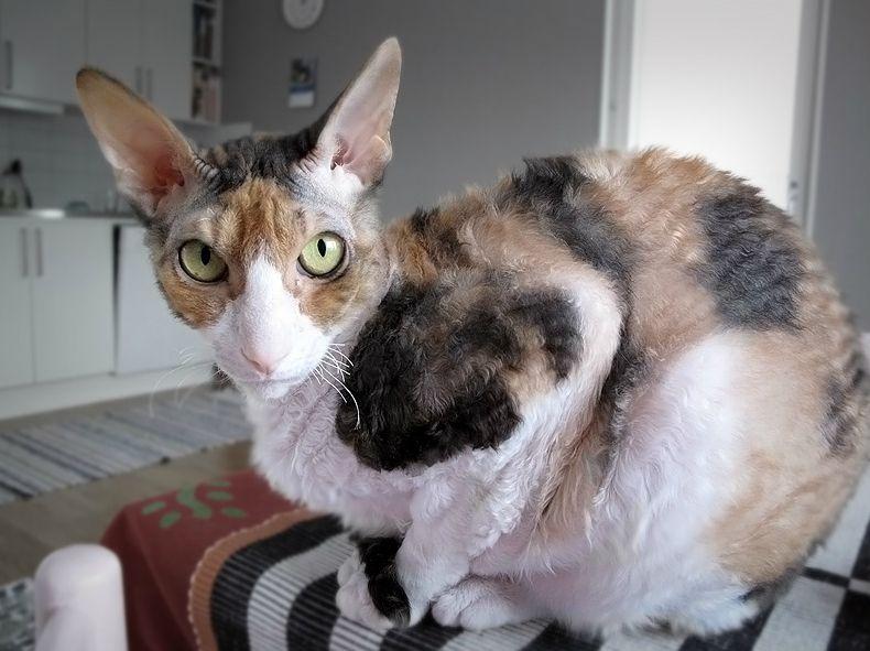 Can Cat Dander Get Through A Duvet Cover
