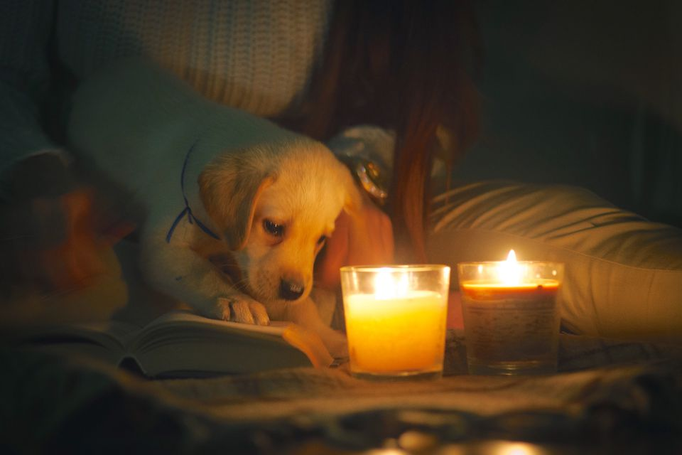 dog near a candle