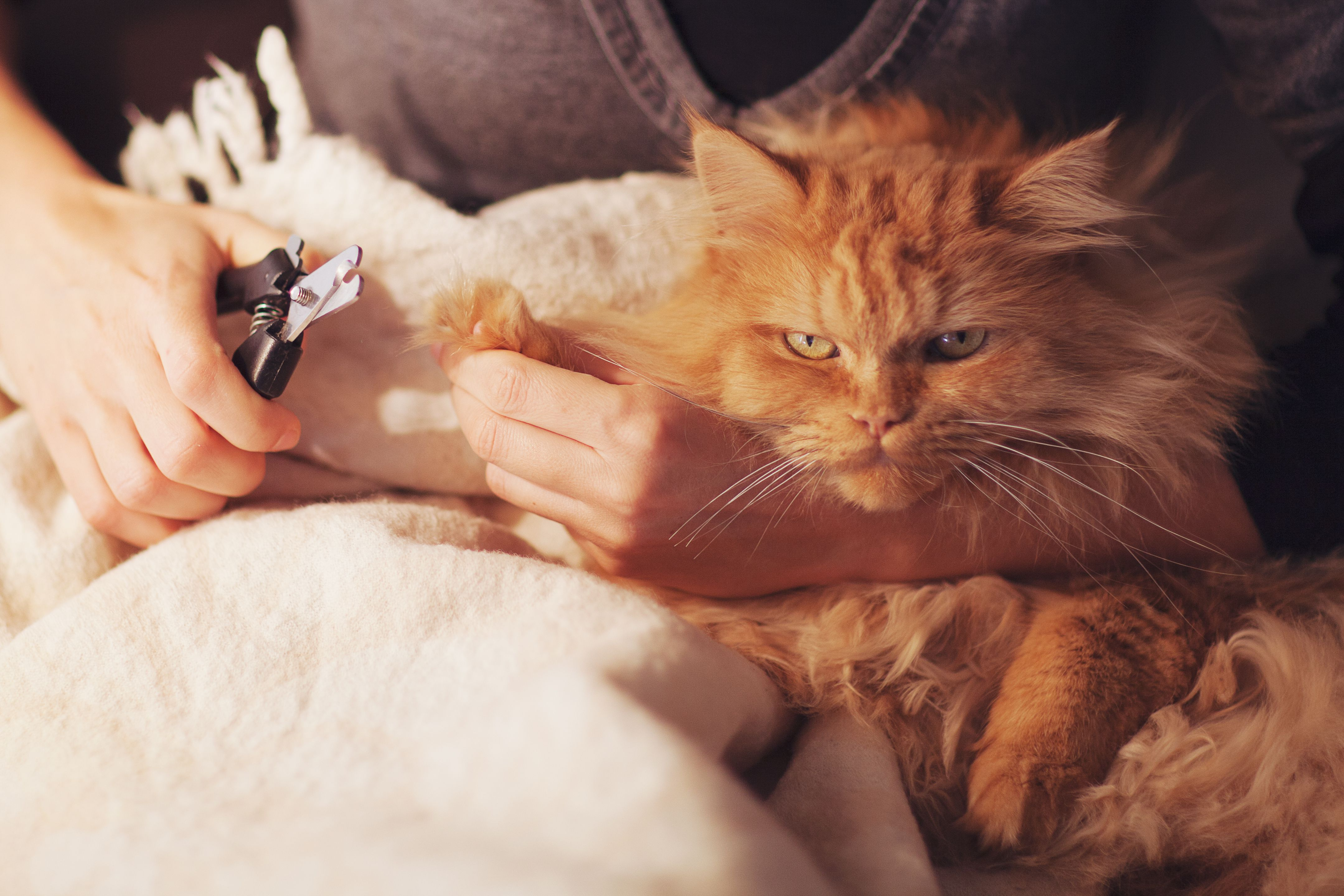 Top 12 Myths and Misconceptions About Cats