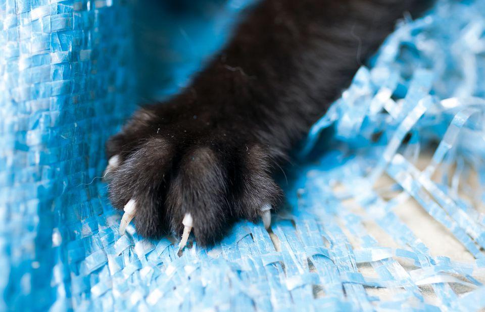 rascarse el gato