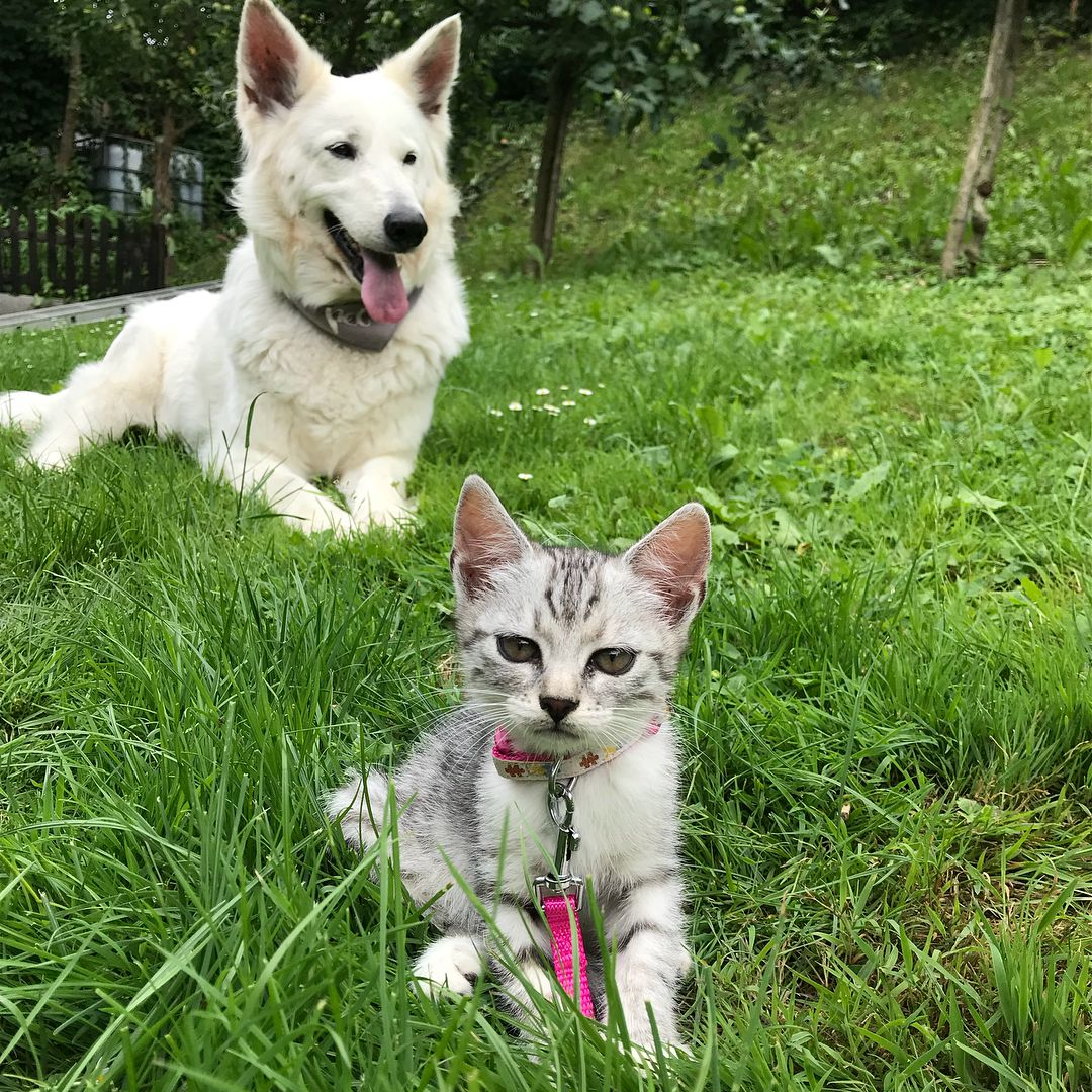 10 Reasons Why Cats Make Better Pets Than Dogs