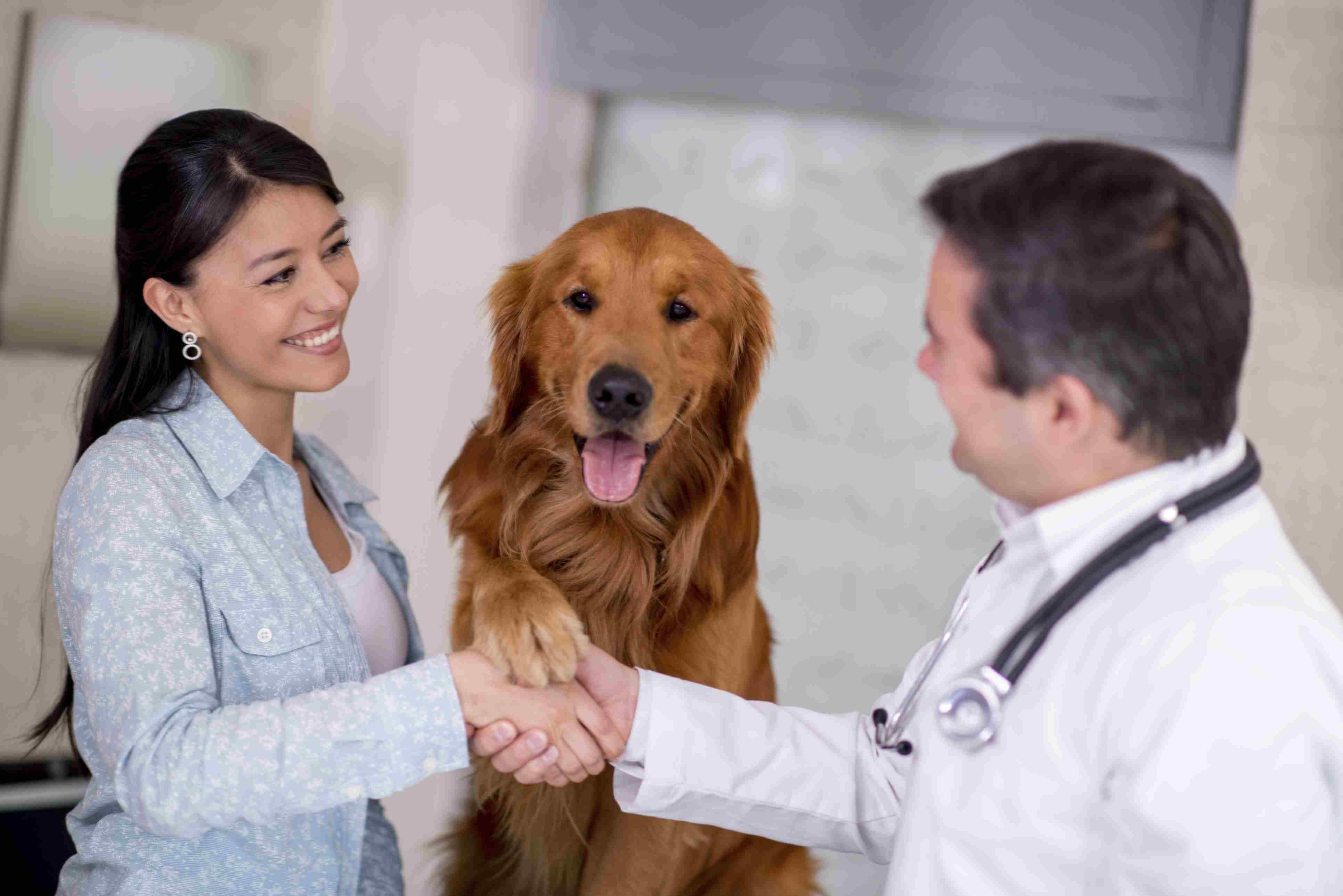 veterinarian, dog, pet owner