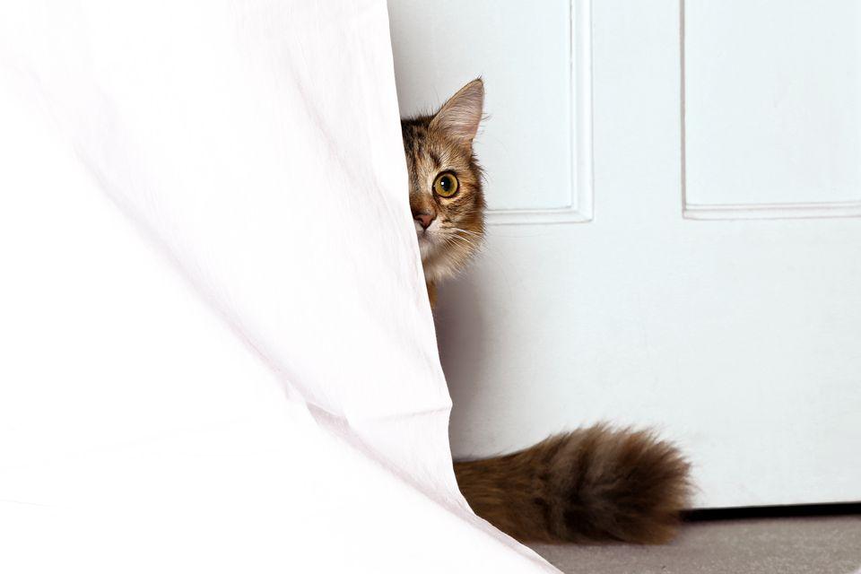A cat hiding behind a curtain