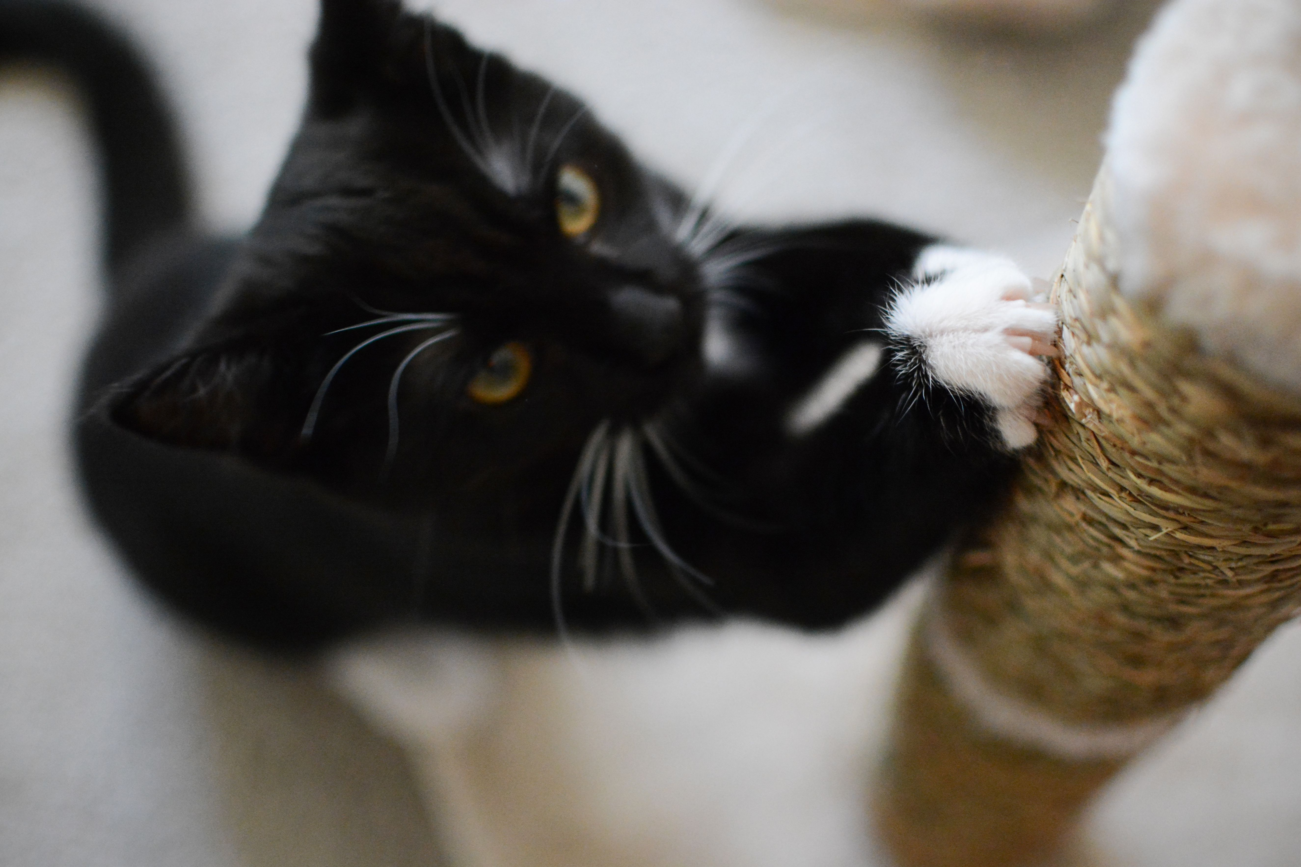 Top Reasons Not to Declaw Your Cat