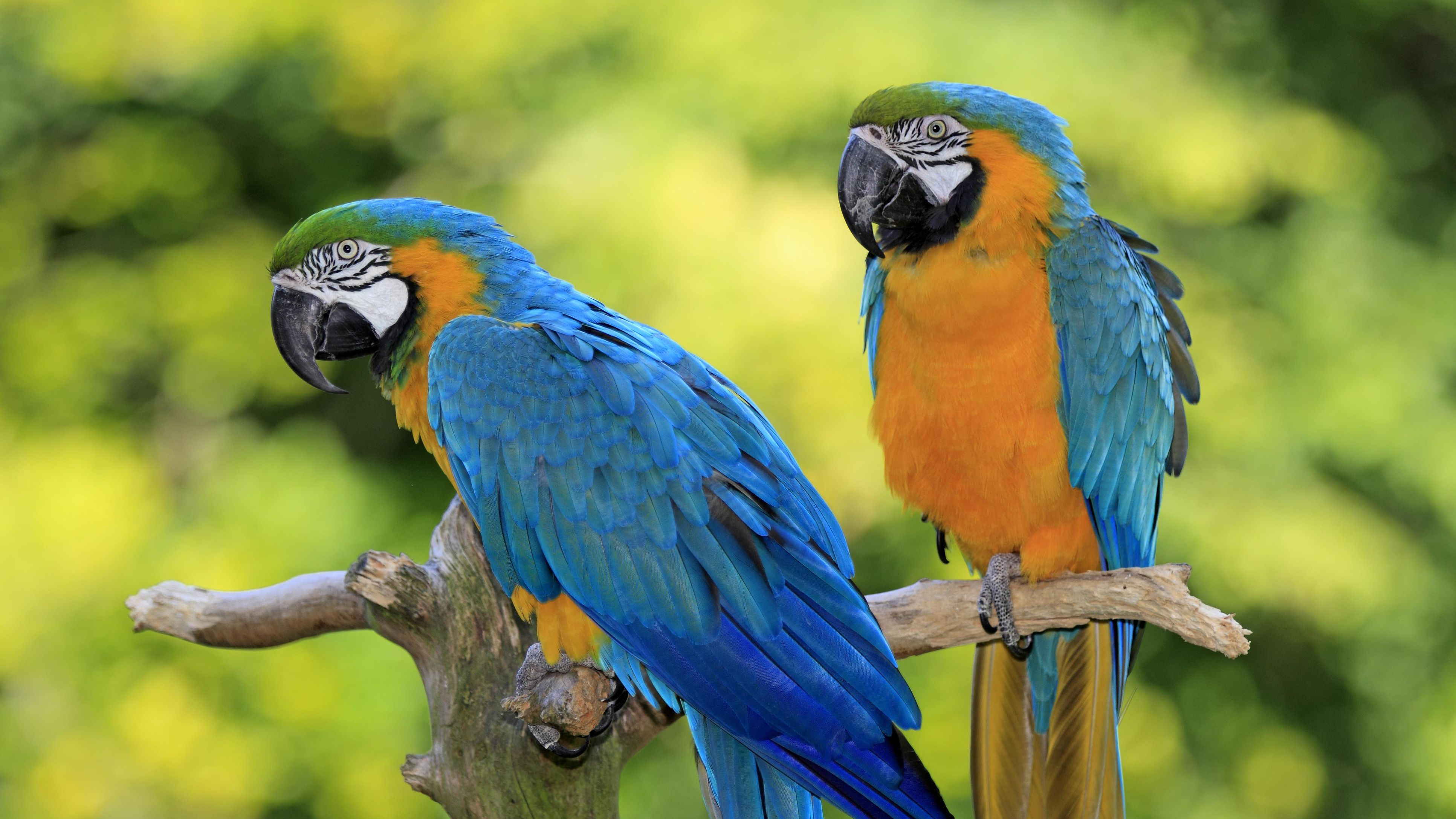 8 Top Large Parrots to Keep as Pets