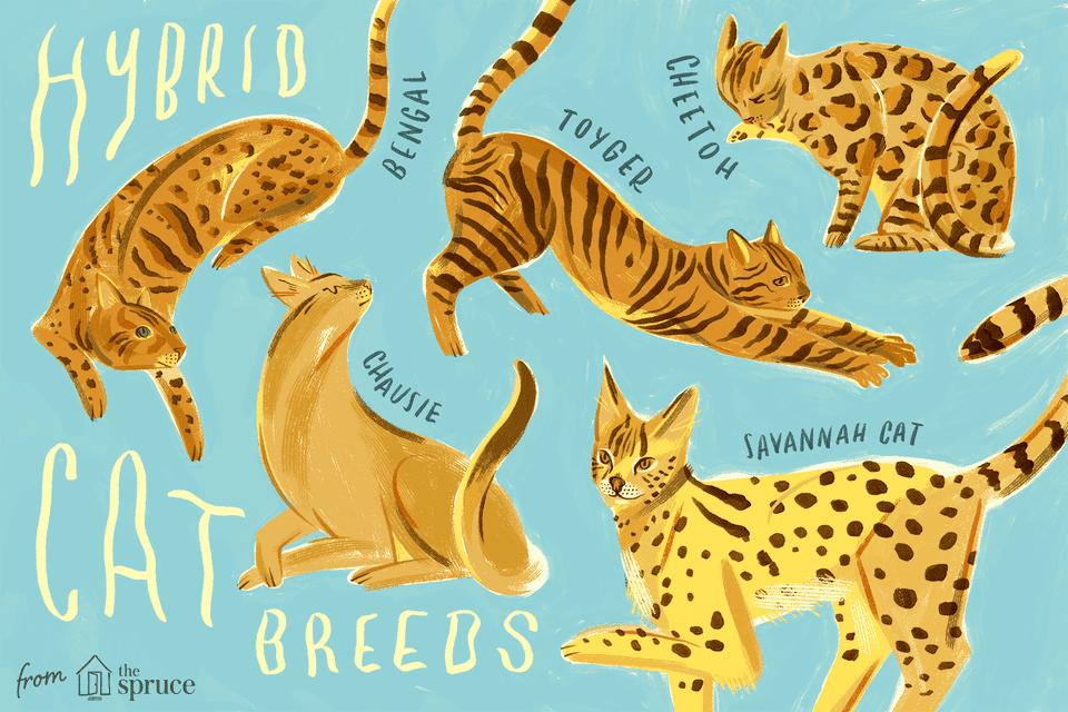 Ilustración de diferentes gatos híbridos