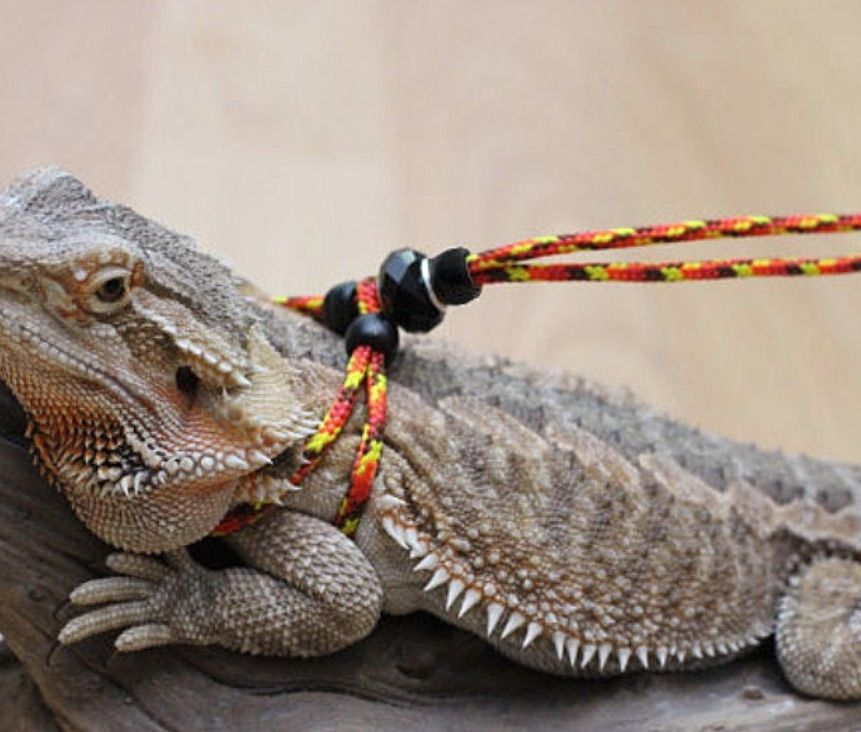 My Reptile Rocks Adjustable Reptile Leash