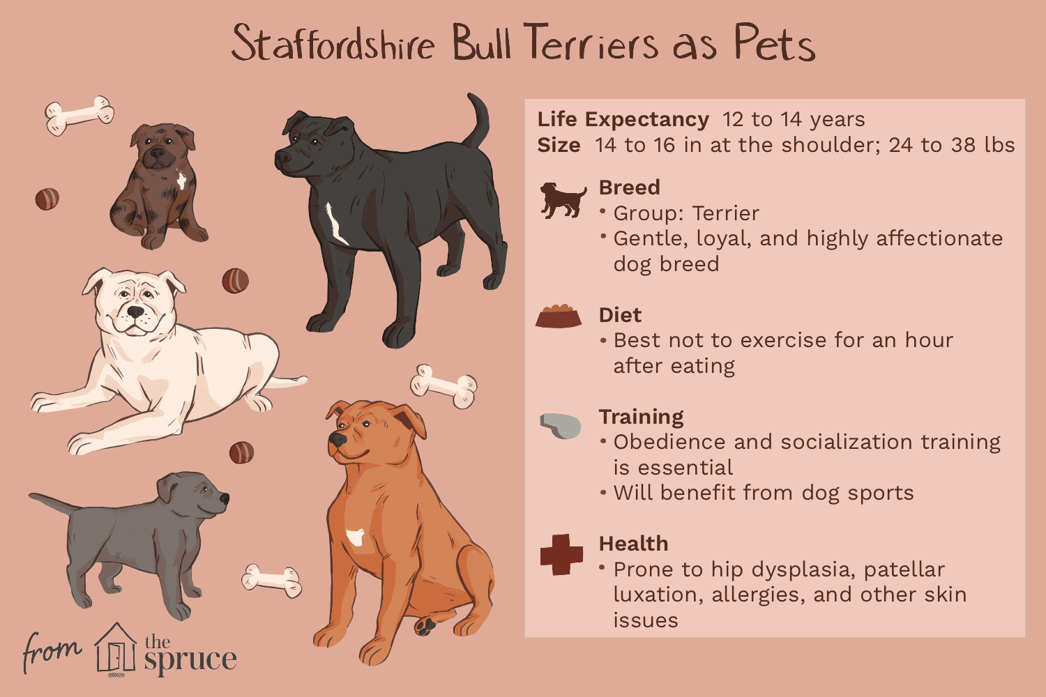 staffordshire bull terriers as pets illustration