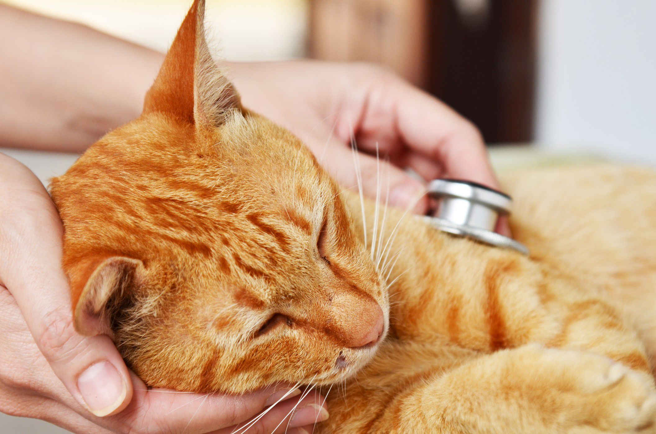 7 Signs That Your Cat Is in Pain