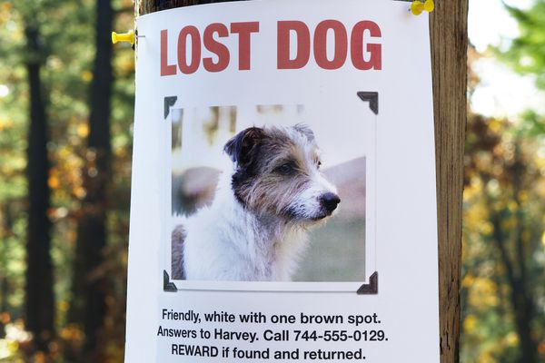 lost dog poster on a tree