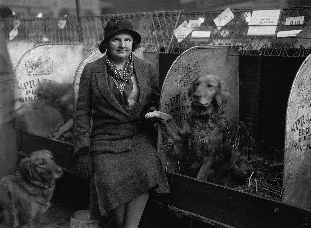 Febrero de 1932: Dos Golden Retrievers entraron en un Crufts Dog Show, posan con su dueño.