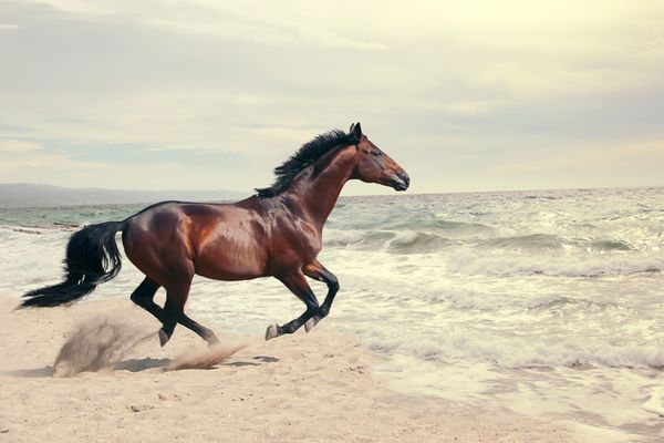 Horse running into water