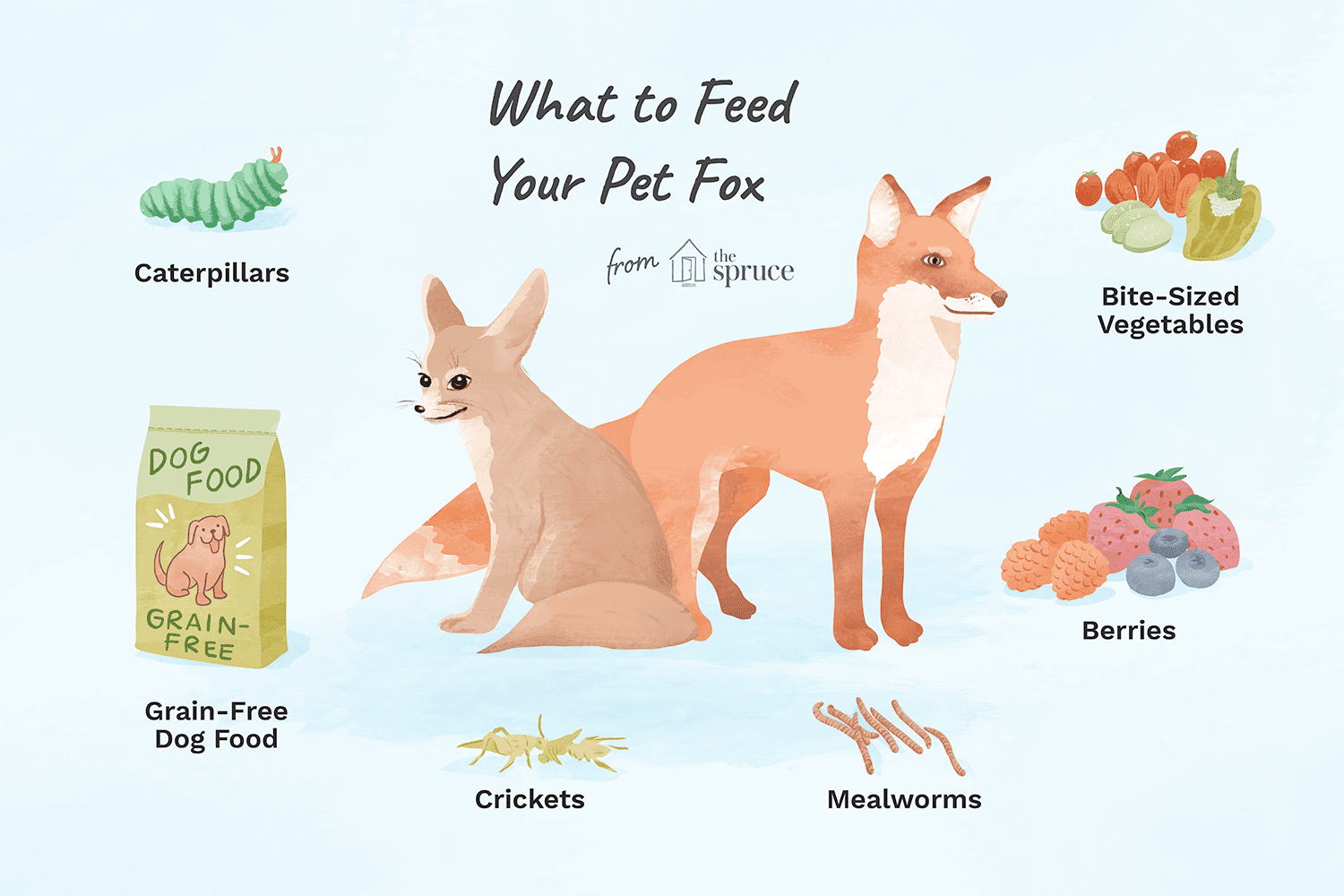 illustration of what to feed your pet fox