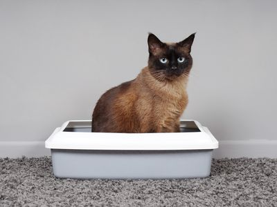Cat Training Solving Common Litter Box Problems