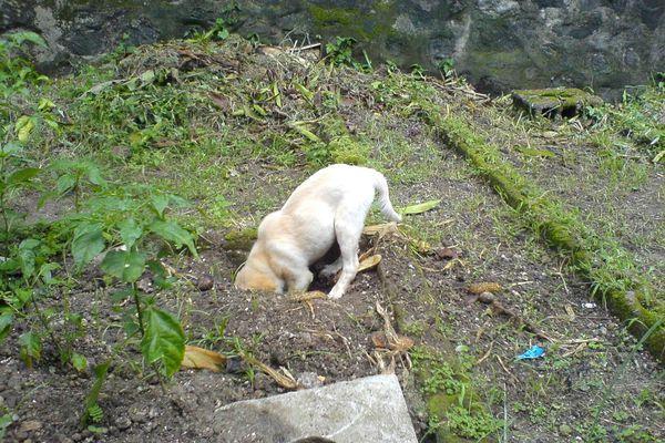 Dog Digging Hole In Backyard