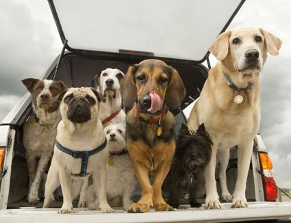 variety of dogs in a car