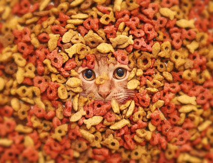 Expired Pet Food Toxic